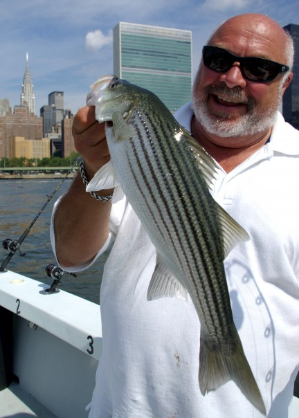 Capt. Tony Dilernia with a healthy, NY City striped bass.