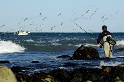 Striper blitz at Montauk, NY keeps casters busy by boat and by beach!
